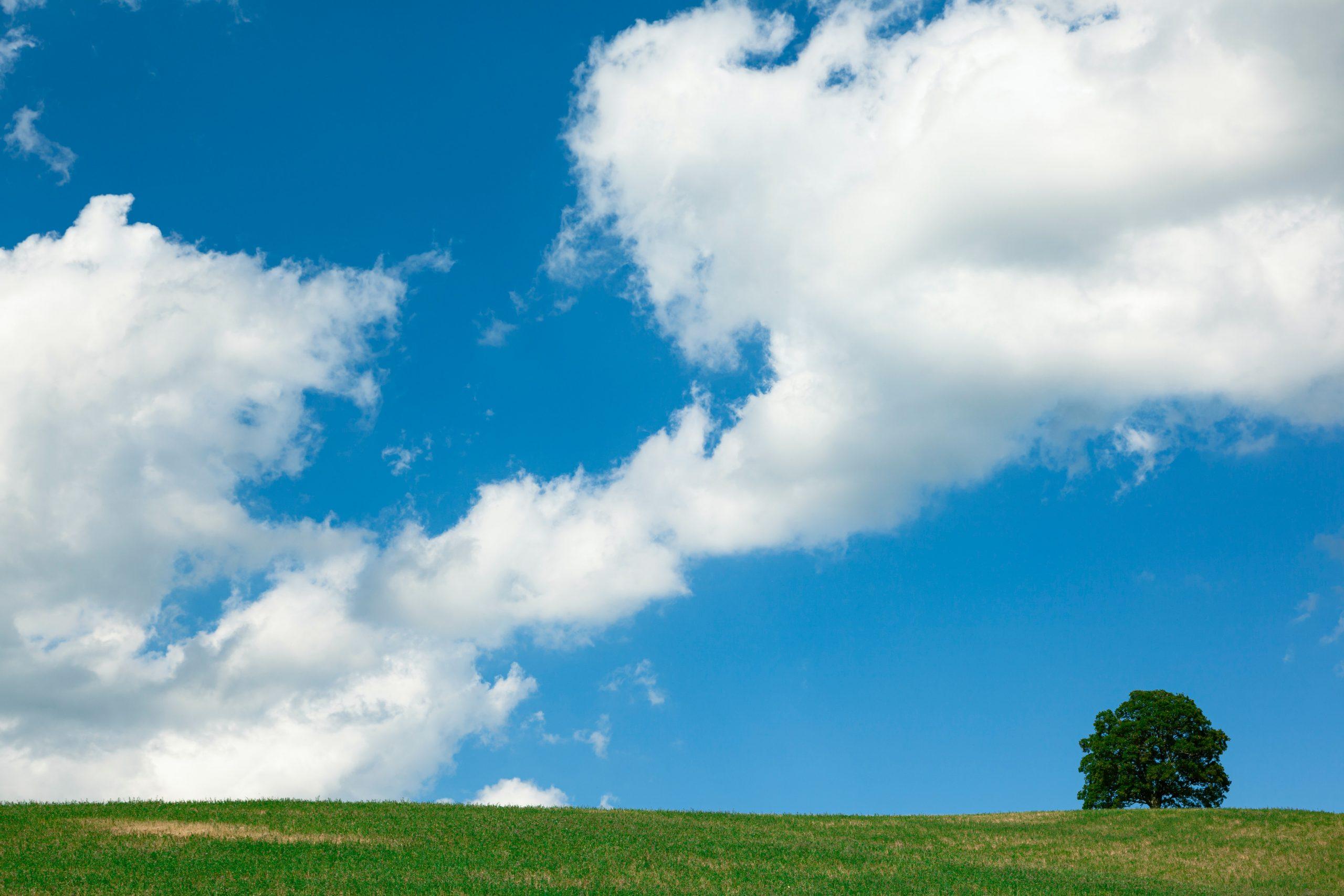 La tutela dell'ambiente entra nei principi fondamentali della Costituzione italiana